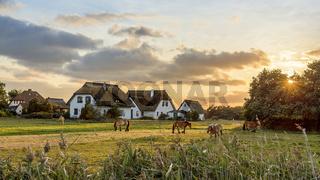Vitte | Hiddensee | Pferdekoppel