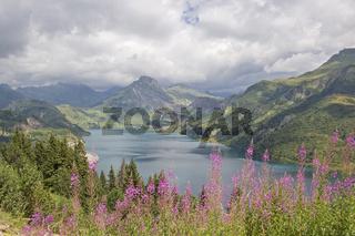 Waldweidenröschen am Lac de Roselend