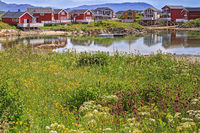 Houses Clustered Around The Harbour At Sommaroy Island Tromso Norway