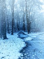 Winter scene beech forest