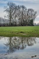 Spegelung einer Baumreihe