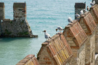 Möven auf Mauer / Seagulls onto wall