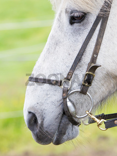 Horse portrait close-up