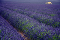 Plateau Valensole, Provence, Frankreich