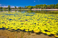 Soderica lake green landscape and water lilys view