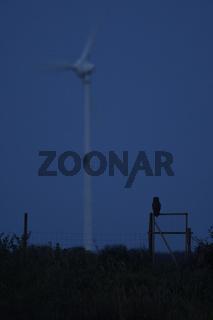 Gefährdungspotential... Europäischer Uhu *Bubo bubo* jagt in tiefer Nacht in Nähe eines Windrades