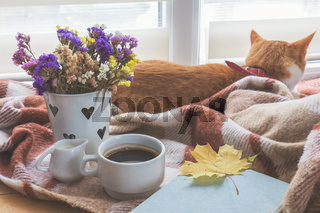 Cup of coffee, book with autumn yellow leaf and red-white cat surrounded wool blanket on windowsill