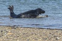 Spielen im Wasser 2