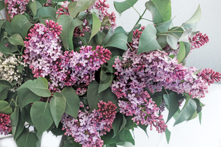 Branch of lilac with beautiful colors.