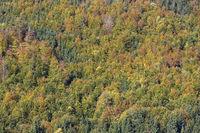 Bunt gefärbter Herbstwald, formatfüllend