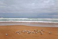 Sandy beach with seagulls