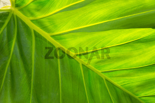 Close up of green leaf texture.