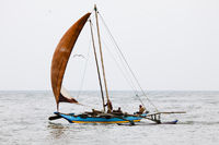 Segelboot - Negombo, Sri Lanka