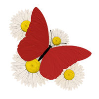 Red butterfly with four chamomile