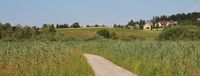 Footpath leading trough reed.