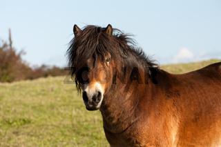 Horse pony