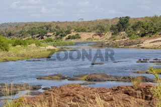 River in the Kruger National Park South Africa
