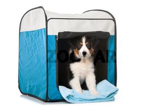 Hund in Stoffbox