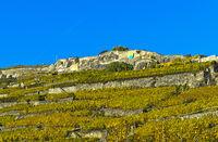 Terrassierte Weinberge von Rivaz im Herbst,  Rivaz, Lavaux, Waadt, Schweiz