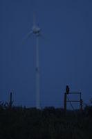 Windkraft... Europäischer Uhu *Bubo bubo*