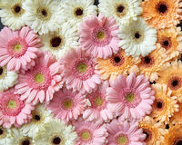 Beautiful floral background of different flowers gerberas. Spring concept