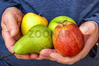 Hand holds apples and pear