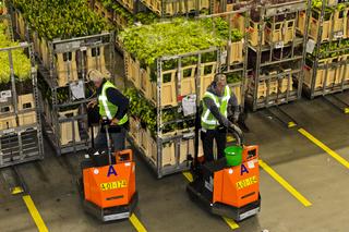 Vorbereitung von Auktionslots für die Blumen. und Pflanzenauktion, Royal FloraHolland, Niederlande
