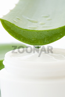 Aloe Vera Leave with open white lotion box as closeup on white background