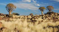 Namibia, Keetmanshoop, Quiver Tree