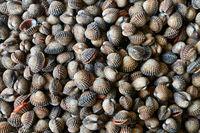 Many shellfish on market