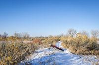 fat bike on a winter trail