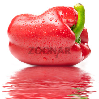 fresh wet red paprika isolated on white on water