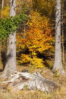 Herbstimpressionen vom Selketal-Stieg im Harz
