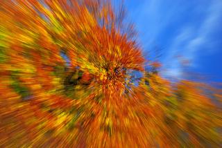 Fallendes Herbstlaub