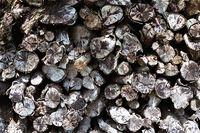 brennholz - holzstapel - wood