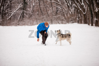 Man walks the husky
