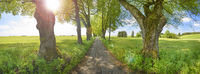 avenue with old linden trees, small road and sunbeams