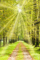 Baumallee mit vielen alten Linden und Fußweg im Frühling