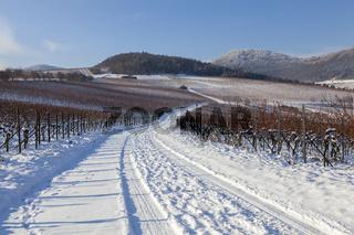 Blick über Weinfelder auf den Pfälzerwald