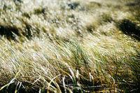Closeup of backlit grass