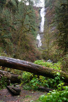 Rain Forest Trail Wet Gravel Lush Green Woods Waterfall