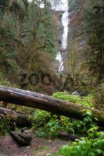 Rain Forest Trail Wet Gravel Lush Green Woods Waterfall