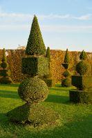 Buchsbäume in einem öffentlichen barocken Landschaftspark
