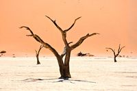 Baeume im Deadvlei Namibia