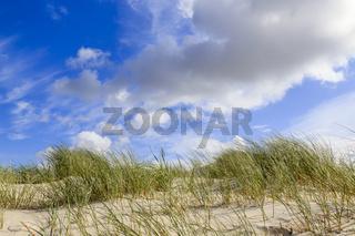 Dünen auf Amrum, Deutschland