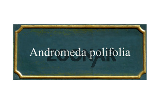 schild Graenke,Andromeda polifolia