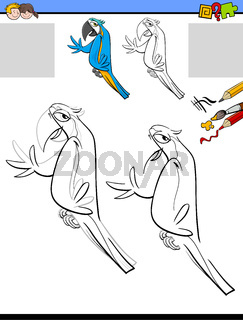 drawing and coloring activity with macaw bird