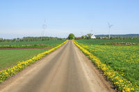 Country road with flowering dandelion flowers and Wind power plant