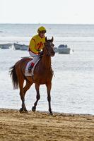 Horse race on Sanlucar of Barrameda, Spain, August  2011