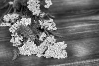 Yarrow flowers on wooden background.